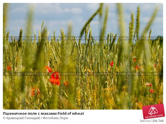 Купить «Пшеничное поле с маками Field of wheat», фото № 336744, снято 30 июня 2004 г. (c) Кравецкий Геннадий / Фотобанк Лори
