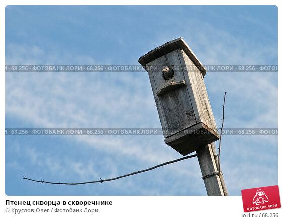 Купить «Птенец скворца в скворечнике», фото № 68256, снято 4 июня 2007 г. (c) Круглов Олег / Фотобанк Лори