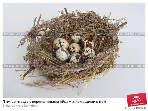 Птичье гнездо с перепелиными яйцами, лежащими в нем, фото № 194880, снято 3 октября 2007 г. (c) Harry / Фотобанк Лори