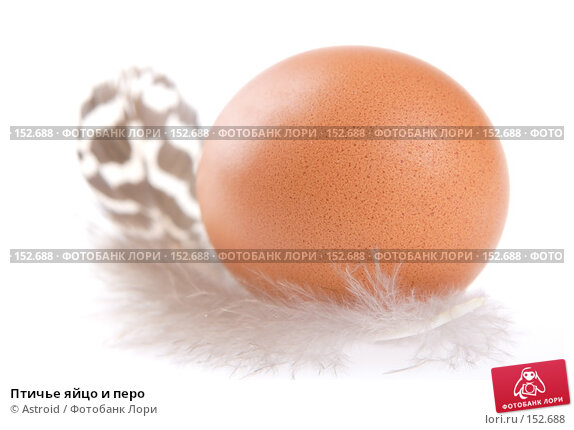 Птичье яйцо и перо, фото № 152688, снято 5 января 2007 г. (c) Astroid / Фотобанк Лори
