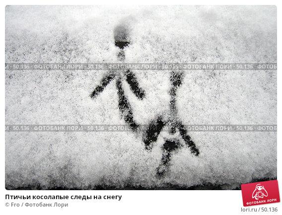 Птичьи косолапые следы на снегу, фото № 50136, снято 26 октября 2005 г. (c) Fro / Фотобанк Лори