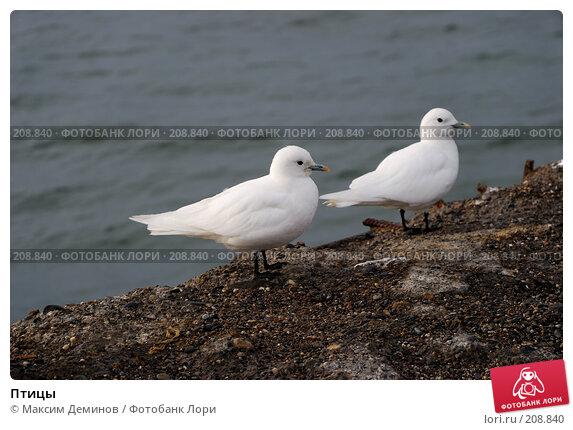 Купить «Птицы», фото № 208840, снято 27 сентября 2007 г. (c) Максим Деминов / Фотобанк Лори