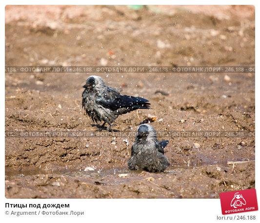 Птицы под дождем, фото № 246188, снято 2 апреля 2008 г. (c) Argument / Фотобанк Лори