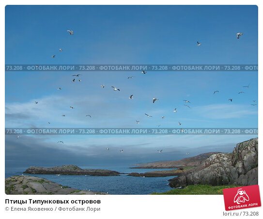 Птицы Типунковых островов, фото № 73208, снято 19 ноября 2006 г. (c) Елена Яковенко / Фотобанк Лори