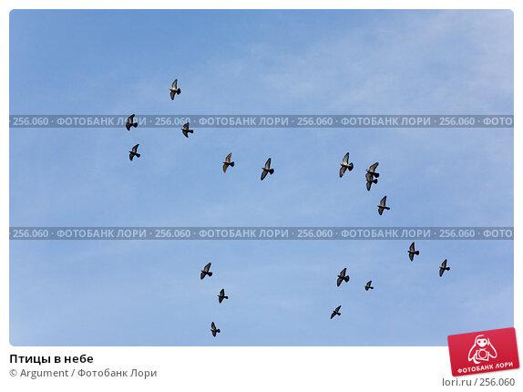Птицы в небе, фото № 256060, снято 5 апреля 2008 г. (c) Argument / Фотобанк Лори