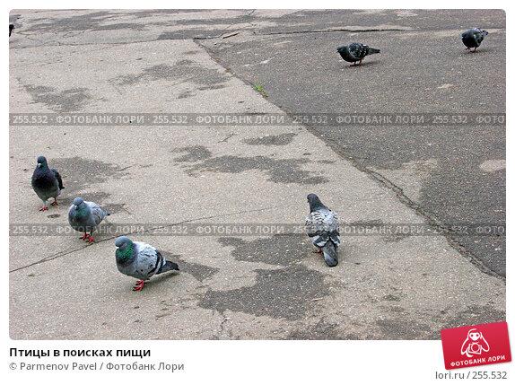 Птицы в поисках пищи, фото № 255532, снято 17 апреля 2008 г. (c) Parmenov Pavel / Фотобанк Лори