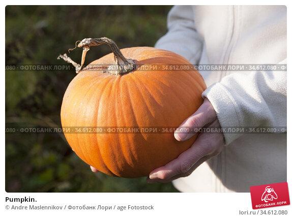 Pumpkin. Стоковое фото, фотограф Andre Maslennikov / age Fotostock / Фотобанк Лори