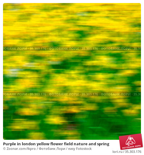 Purple in london yellow flower field nature and spring. Стоковое фото, фотограф Zoonar.com/lkpro / easy Fotostock / Фотобанк Лори