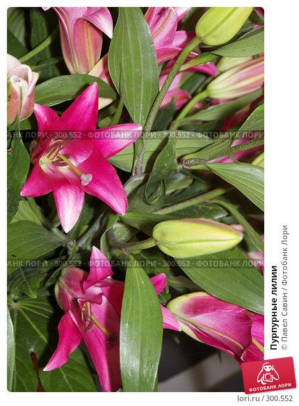 Пурпурные лилии, фото № 300552, снято 15 апреля 2008 г. (c) Павел Савин / Фотобанк Лори