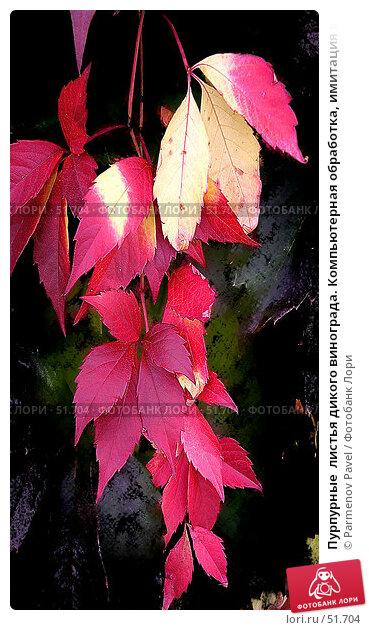 Пурпурные  листья дикого винограда. Компьютерная обработка, имитация живописи, фото № 51704, снято 17 сентября 2006 г. (c) Parmenov Pavel / Фотобанк Лори