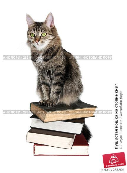 Пушистая кошка на стопке книг, фото № 283904, снято 12 мая 2008 г. (c) Лидия Рыженко / Фотобанк Лори