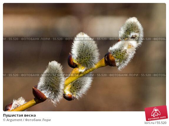 Пушистая весна, фото № 55520, снято 23 апреля 2006 г. (c) Argument / Фотобанк Лори