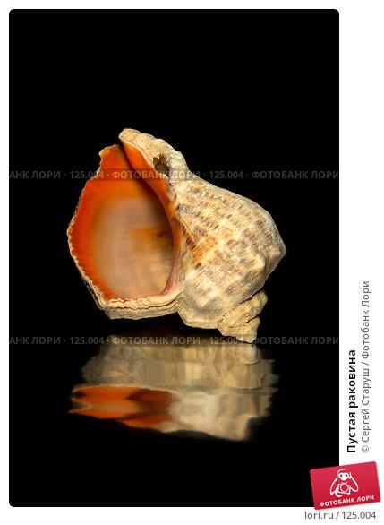 Пустая раковина, фото № 125004, снято 7 октября 2006 г. (c) Сергей Старуш / Фотобанк Лори