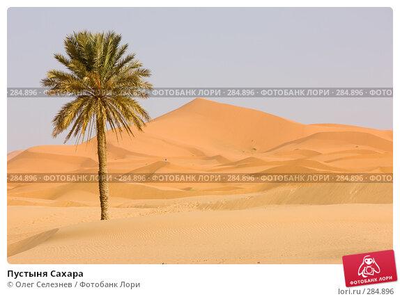 Пустыня Сахара, фото № 284896, снято 29 февраля 2008 г. (c) Олег Селезнев / Фотобанк Лори
