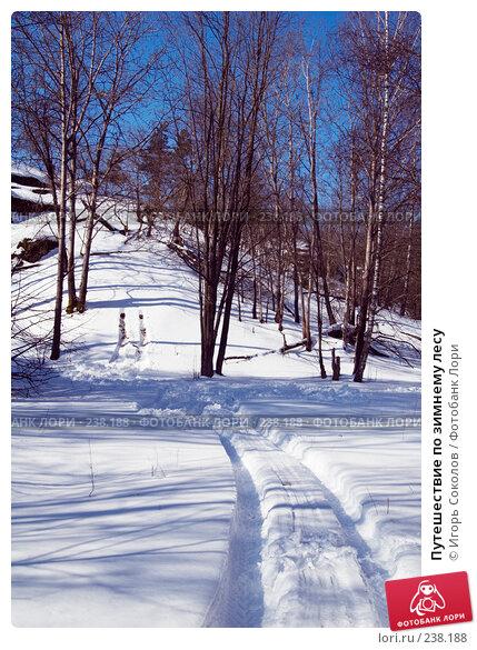 Путешествие по зимнему лесу, фото № 238188, снято 29 марта 2008 г. (c) Игорь Соколов / Фотобанк Лори