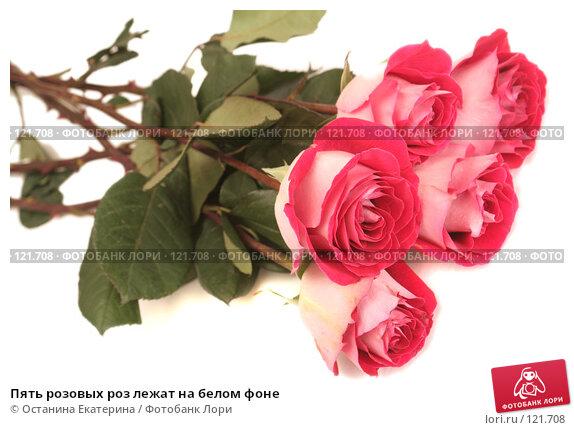 Купить «Пять розовых роз лежат на белом фоне», фото № 121708, снято 12 октября 2007 г. (c) Останина Екатерина / Фотобанк Лори
