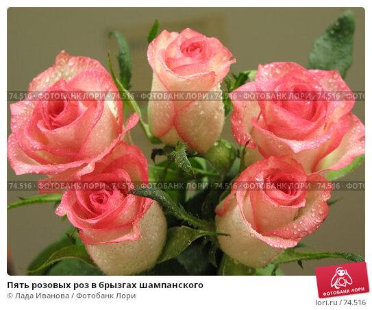 Пять розовых роз в брызгах шампанского, фото № 74516, снято 16 июня 2007 г. (c) Лада Иванова / Фотобанк Лори