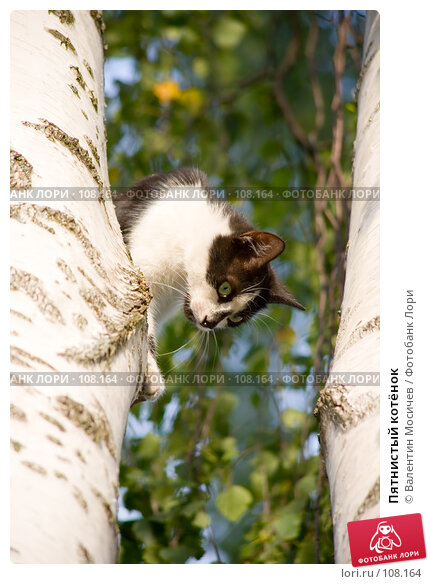 Пятнистый котёнок, фото № 108164, снято 16 августа 2007 г. (c) Валентин Мосичев / Фотобанк Лори