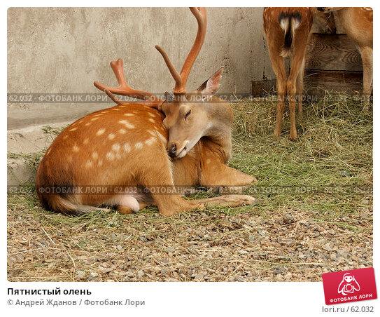 Купить «Пятнистый олень», фото № 62032, снято 7 июля 2007 г. (c) Андрей Жданов / Фотобанк Лори