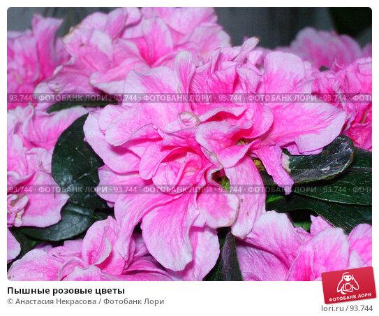 Пышные розовые цветы, фото № 93744, снято 1 мая 2005 г. (c) Анастасия Некрасова / Фотобанк Лори