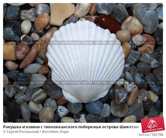 Ракушка и камни с тихоокеанского побережья острова Шикотан, фото № 169796, снято 26 февраля 2017 г. (c) Сергей Рогальский / Фотобанк Лори