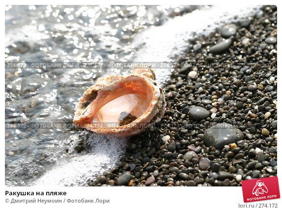 Ракушка на пляже, эксклюзивное фото № 274172, снято 20 сентября 2005 г. (c) Дмитрий Неумоин / Фотобанк Лори