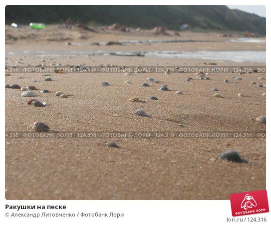 Ракушки на песке, фото № 124316, снято 5 сентября 2007 г. (c) Александр Литовченко / Фотобанк Лори