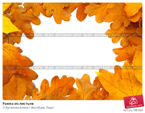 Рамка из листьев, фото № 98424, снято 8 октября 2007 г. (c) Бутинова Елена / Фотобанк Лори