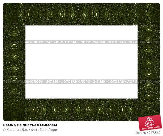 Рамка из листьев мимозы, иллюстрация № 247560 (c) Карелин Д.А. / Фотобанк Лори