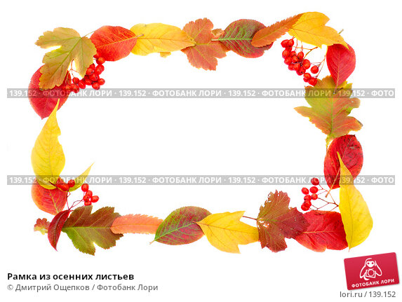 Купить «Рамка из осенних листьев», фото № 139152, снято 19 сентября 2007 г. (c) Дмитрий Ощепков / Фотобанк Лори