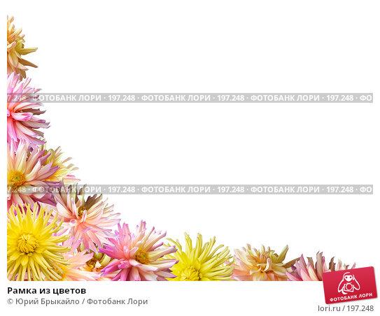 Рамка из цветов, иллюстрация № 197248 (c) Юрий Брыкайло / Фотобанк Лори