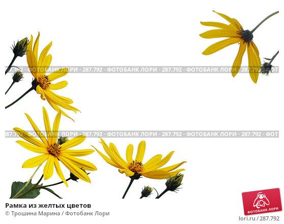 Рамка из желтых цветов, фото № 287792, снято 26 июля 2017 г. (c) Трошина Марина / Фотобанк Лори