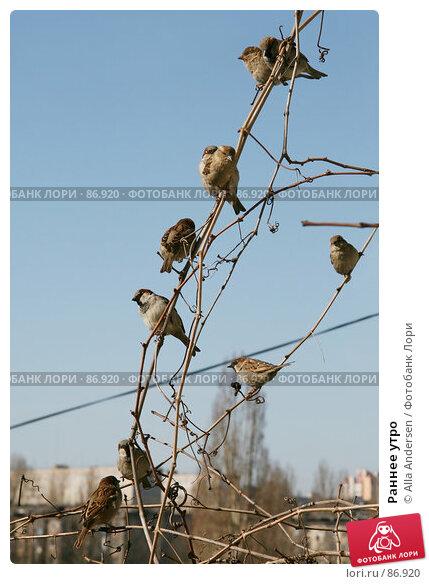 Раннее утро, фото № 86920, снято 29 марта 2007 г. (c) Alla Andersen / Фотобанк Лори
