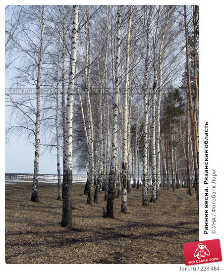 Купить «Ранняя весна. Рязанская область», фото № 228484, снято 9 марта 2008 г. (c) УНА / Фотобанк Лори