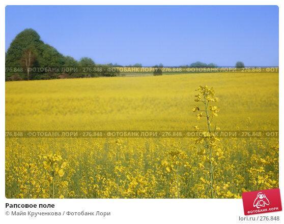 Рапсовое поле, фото № 276848, снято 24 мая 2007 г. (c) Майя Крученкова / Фотобанк Лори