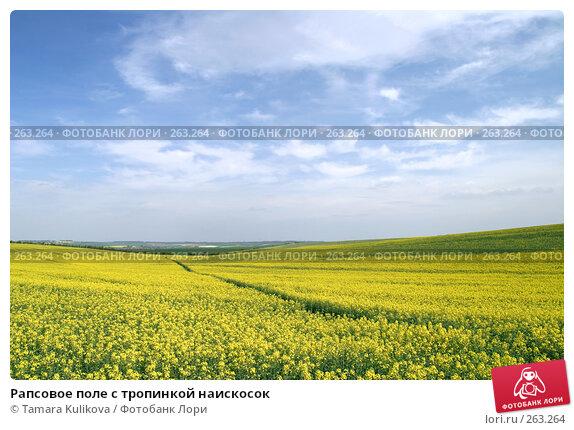 Рапсовое поле с тропинкой наискосок, фото № 263264, снято 26 апреля 2008 г. (c) Tamara Kulikova / Фотобанк Лори