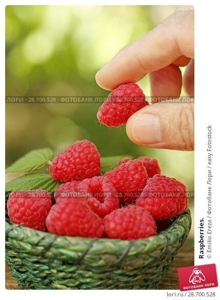 Купить «Raspberries.», фото № 28700528, снято 19 июня 2018 г. (c) easy Fotostock / Фотобанк Лори