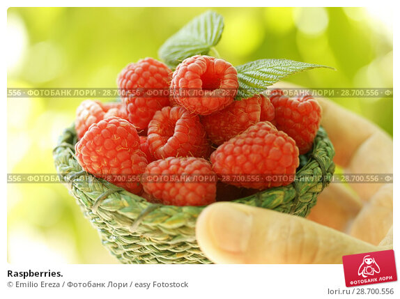 Купить «Raspberries.», фото № 28700556, снято 19 июня 2018 г. (c) easy Fotostock / Фотобанк Лори