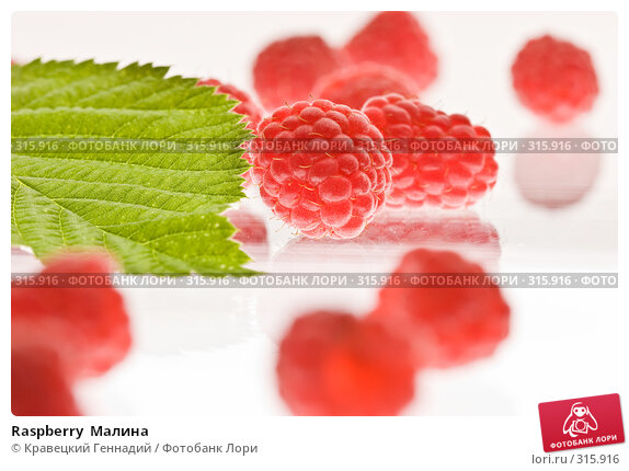 Raspberry  Малина, фото № 315916, снято 22 июля 2005 г. (c) Кравецкий Геннадий / Фотобанк Лори