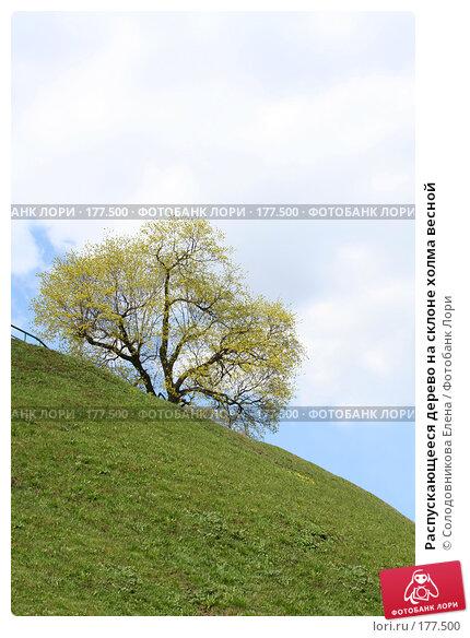Распускающееся дерево на склоне холма весной, фото № 177500, снято 26 апреля 2007 г. (c) Солодовникова Елена / Фотобанк Лори