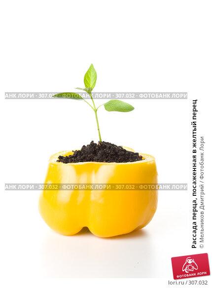 Рассада перца, посаженная в желтый перец, фото № 307032, снято 28 мая 2008 г. (c) Мельников Дмитрий / Фотобанк Лори