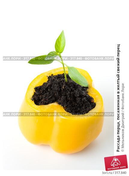 Рассада перца, посаженная в желтый свежий перец, фото № 317840, снято 28 мая 2008 г. (c) Мельников Дмитрий / Фотобанк Лори