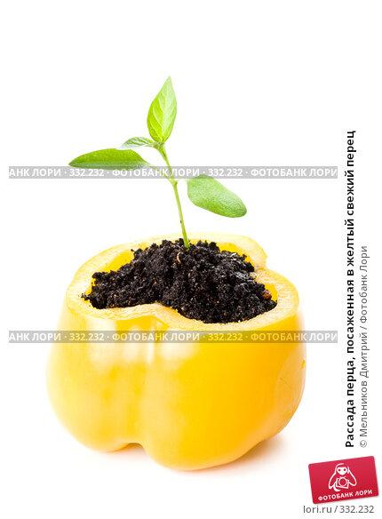 Купить «Рассада перца, посаженная в желтый свежий перец», фото № 332232, снято 28 мая 2008 г. (c) Мельников Дмитрий / Фотобанк Лори