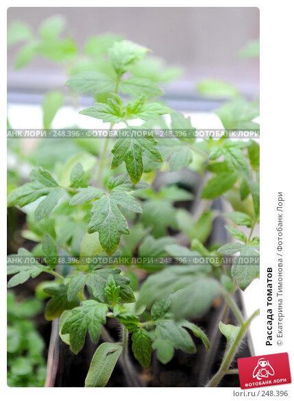 Купить «Рассада томатов», фото № 248396, снято 6 апреля 2007 г. (c) Екатерина Тимонова / Фотобанк Лори