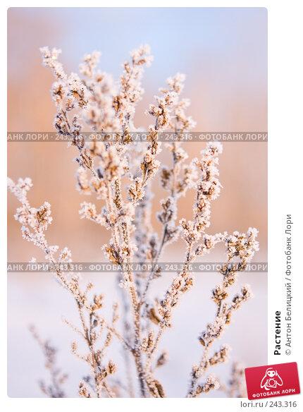 Растение, фото № 243316, снято 11 февраля 2008 г. (c) Антон Белицкий / Фотобанк Лори