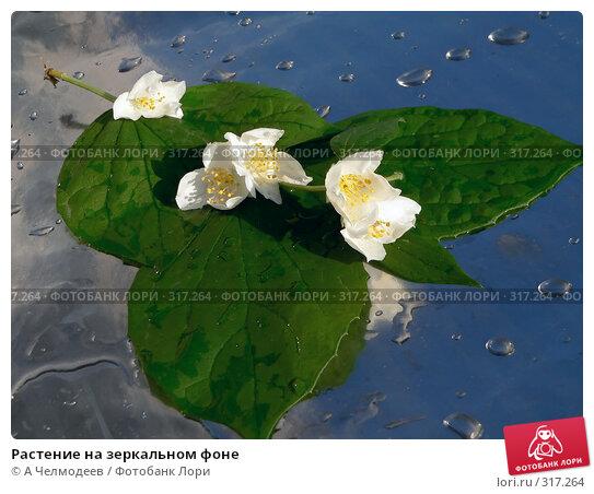 Купить «Растение на зеркальном фоне», фото № 317264, снято 31 мая 2006 г. (c) A Челмодеев / Фотобанк Лори