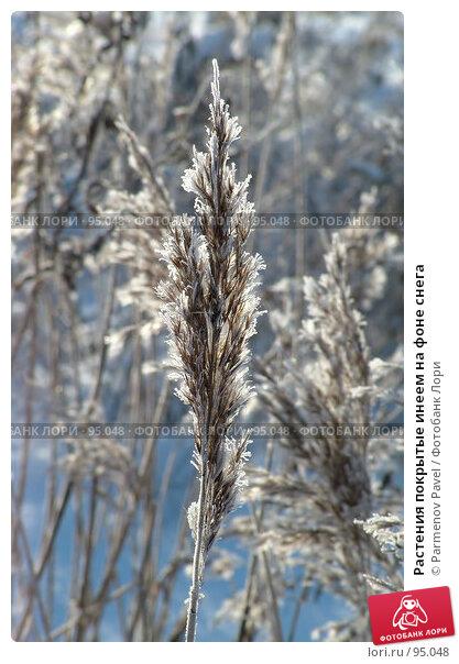 Растения покрытые инеем на фоне снега, фото № 95048, снято 12 февраля 2007 г. (c) Parmenov Pavel / Фотобанк Лори
