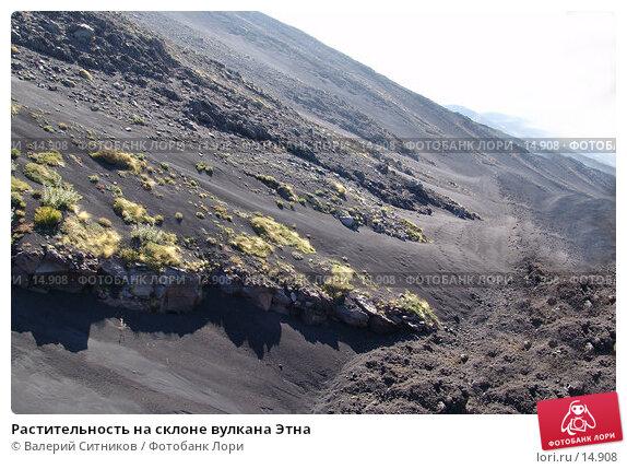 Растительность на склоне вулкана Этна, фото № 14908, снято 7 октября 2004 г. (c) Валерий Ситников / Фотобанк Лори