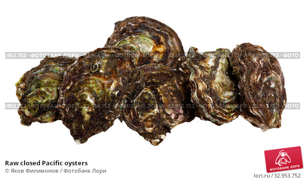 Raw closed Pacific oysters. Стоковое фото, фотограф Яков Филимонов / Фотобанк Лори