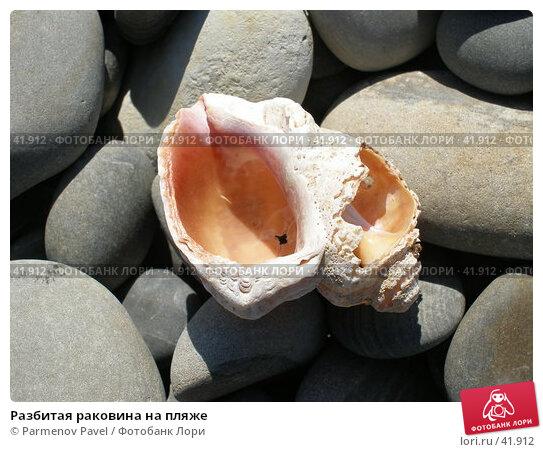Купить «Разбитая раковина на пляже», фото № 41912, снято 23 марта 2007 г. (c) Parmenov Pavel / Фотобанк Лори
